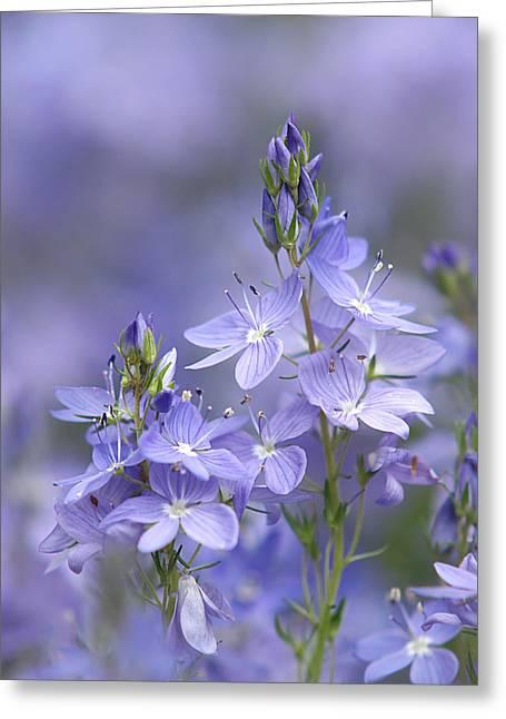 Little Purple Flowers Vertical Greeting Card