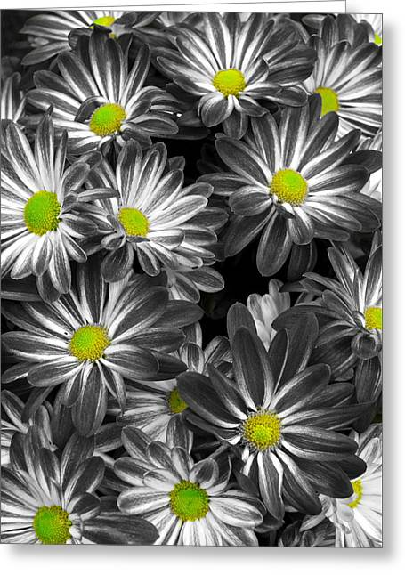 Little Rays Of Sunshine Greeting Card by Frozen in Time Fine Art Photography