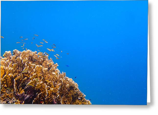 Little Reefers Greeting Card