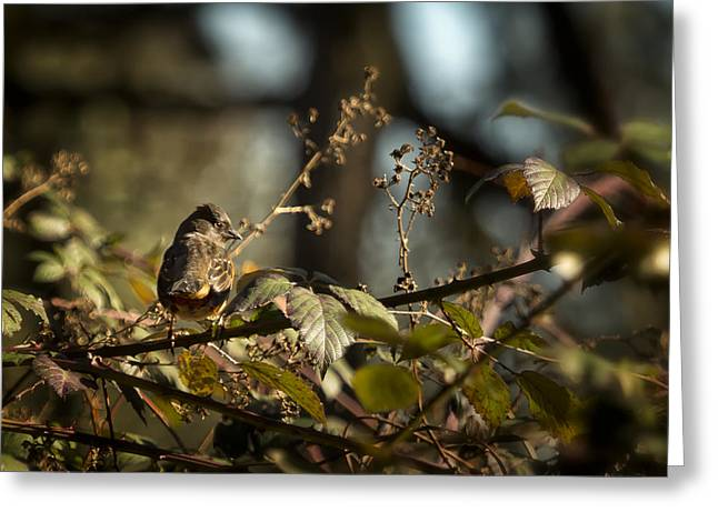 Little Sharp Eyed Bird Greeting Card by Belinda Greb