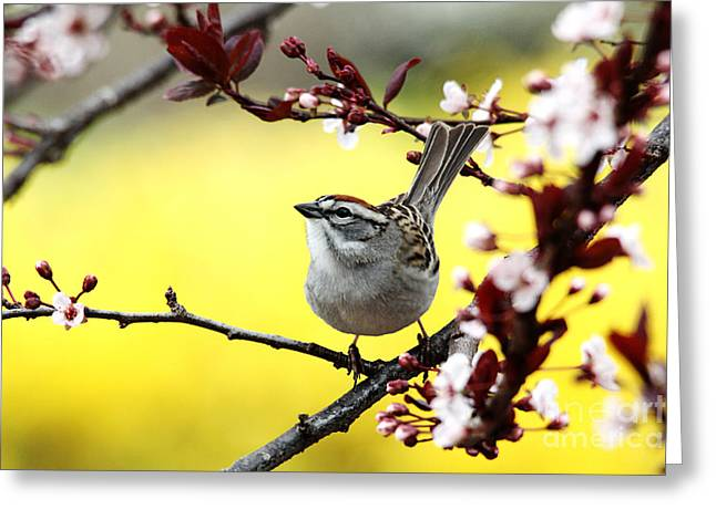Greeting Card featuring the photograph Little Sparrow by Trina  Ansel