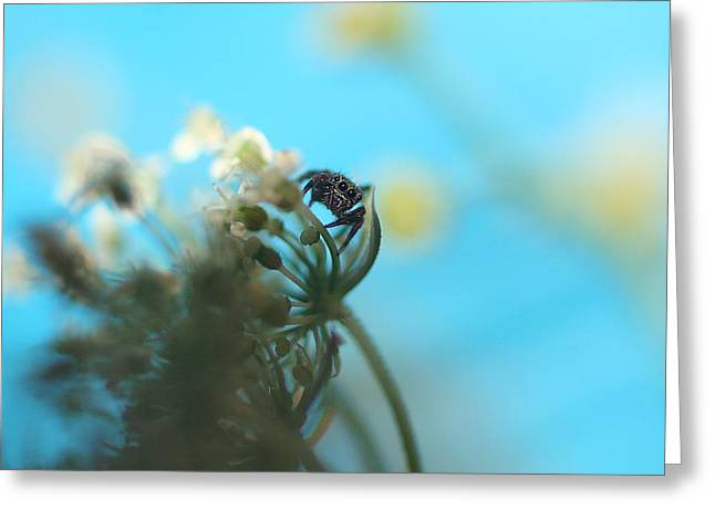 Little Spider Greeting Card by Rachelle Johnston