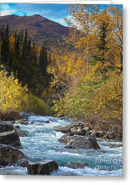 Little Susitna River Greeting Card