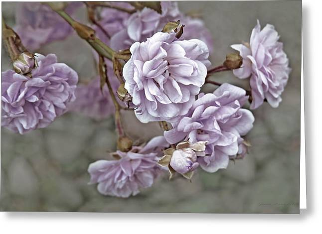 Little Tea Roses Purple Greeting Card