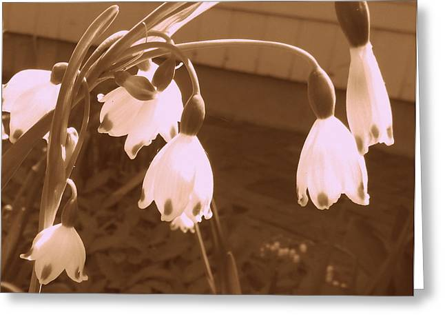 Little White Flowers  Greeting Card by Christy Beal