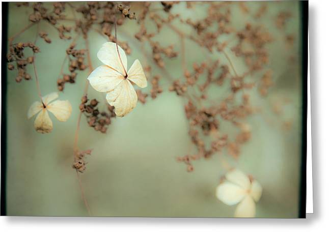 Little White Flowers - Floral - The Little Things In Life Greeting Card by Gary Heller