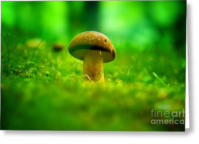 Little Wild Mushroom On A Green Forest Patch Greeting Card