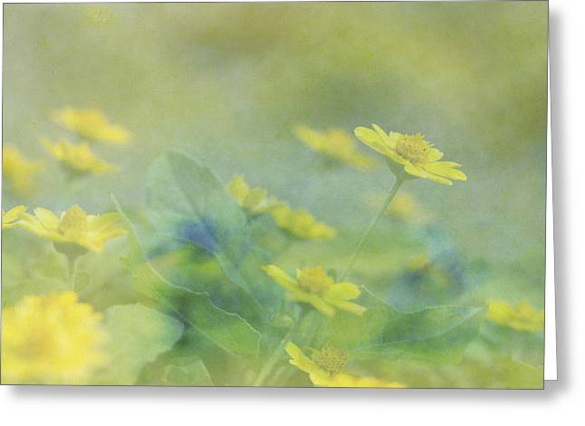 Little Yellow Beauties Greeting Card