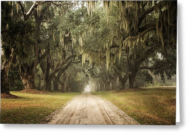 Live Oak Allee' On A Foggy Morn Greeting Card