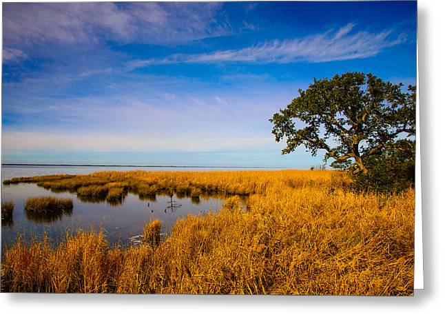 Live Oak By The Sound Greeting Card