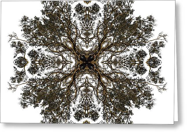 Live Oak Lace Greeting Card by Debra and Dave Vanderlaan