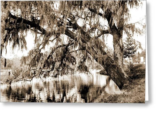 Live Oak, Magnolia Cemetery, Charleston Greeting Card