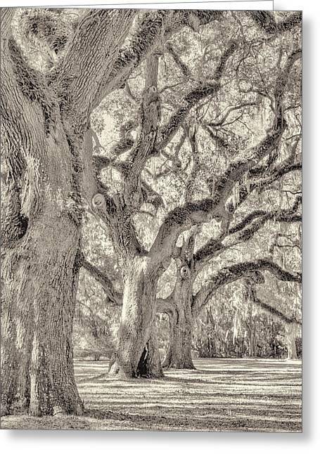 Live Oaks-1 Greeting Card by Bill LITTELL
