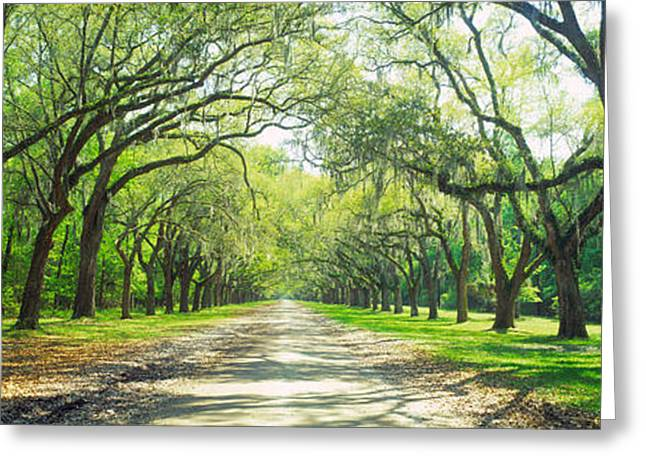 Live Oaks And Spanish Moss Wormsloe Greeting Card by Panoramic Images