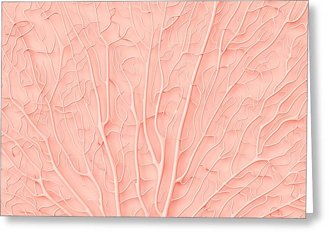 Living Coral Color Of The Year 2019 Greeting Card