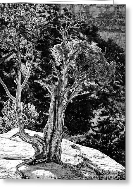 Living On The Edge In Black And White Greeting Card by Lee Craig