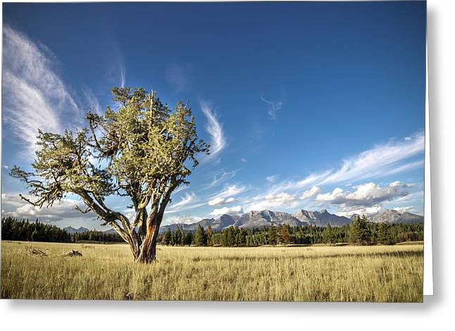 Livingston Range // Glacier National Park Greeting Card by Nicholas Parker
