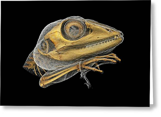 Lizard Greeting Card by Dan Sykes/natural History Museum, London