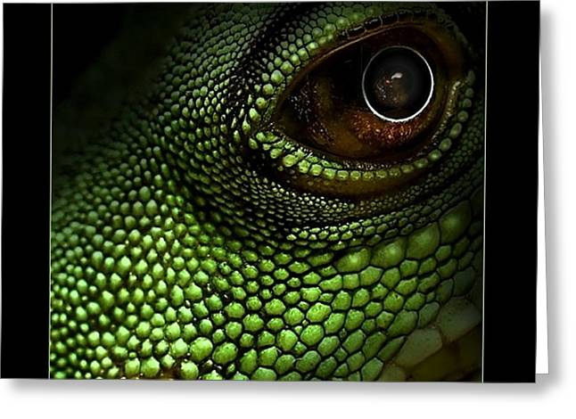 Lizard Eye Greeting Card