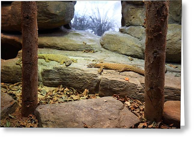 Lizard - National Aquarium In Baltimore Md - 12124 Greeting Card by DC Photographer