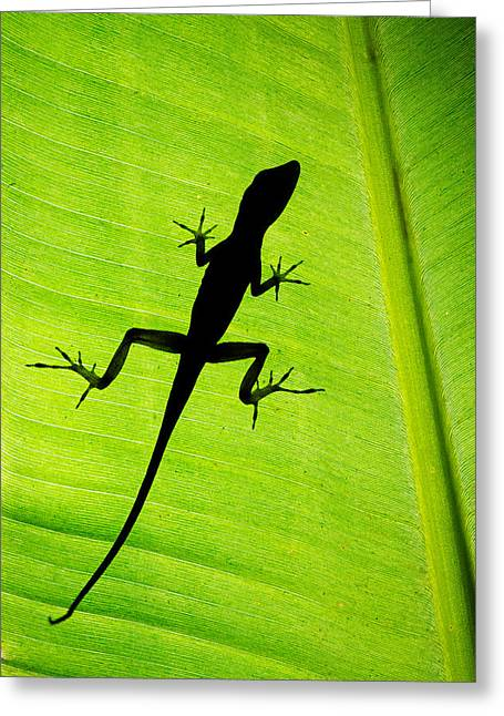 Lizard On Leaf, Sarapiqui, Costa Rica Greeting Card