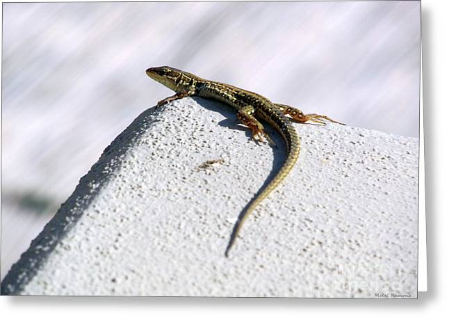 Lizard Greeting Card by Ramona Matei