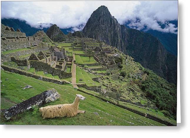 Llama At Machu Picchus Ancient Ruins Greeting Card
