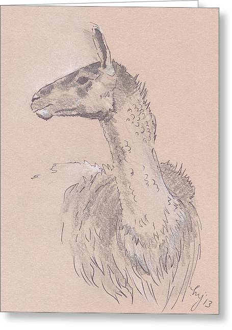 Llama Drawing Greeting Card by Mike Jory