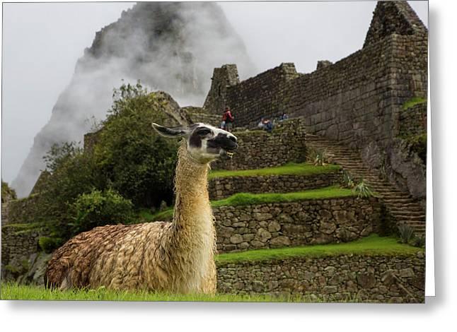 Llama, Machu Picchu, Cusco Region Greeting Card