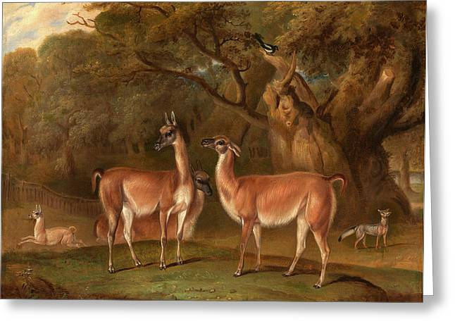 Llamas And A Fox In A Wooded Landscape Llamas In A Park Greeting Card by Litz Collection