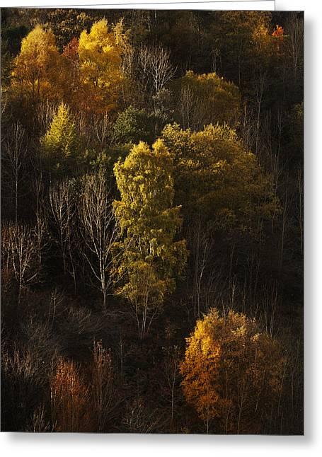Lllyn Clywedog Autmn Light Greeting Card by Nigel Forster