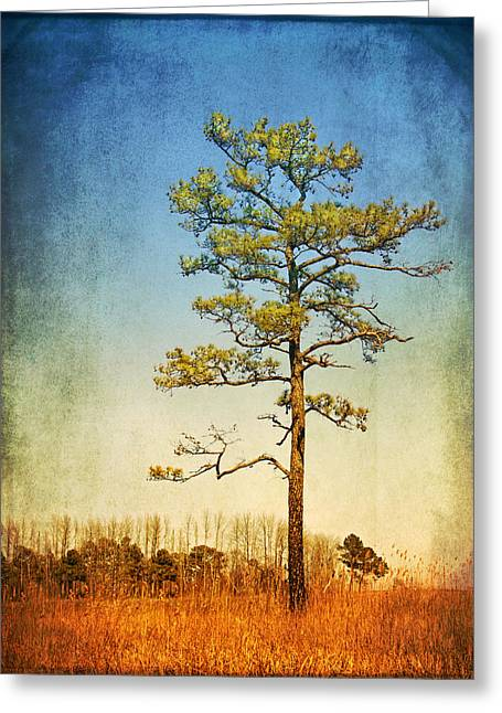 Loblolly Pine Along The Chesapeake Greeting Card