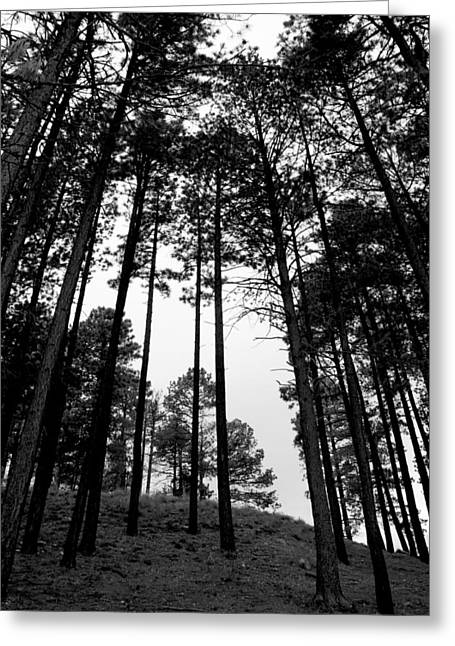 Greeting Card featuring the photograph Lodge Pole Pines by Joe Kozlowski