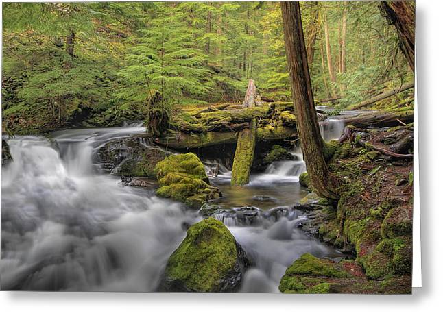 Log Jam Greeting Card by David Gn