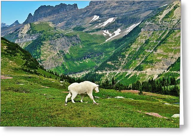 Logan Pass Mountain Goat Greeting Card