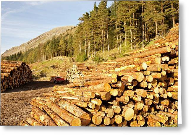 Logging On The Slopes Above Thirlmere Greeting Card by Ashley Cooper
