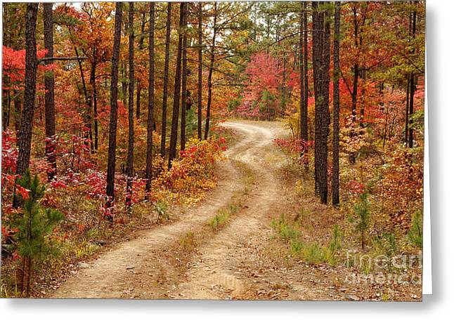 Logging Road In The Ouachita National Forest - Beaver's Bend State Park - Poteau - Oklahoma Arkansas Greeting Card