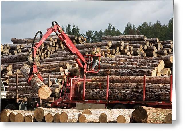 Logs At A Sawmill Greeting Card