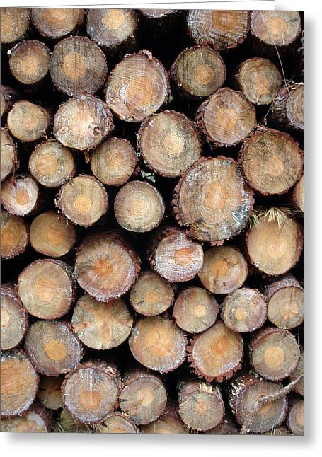 Logs Faces Greeting Card by Michel Mata