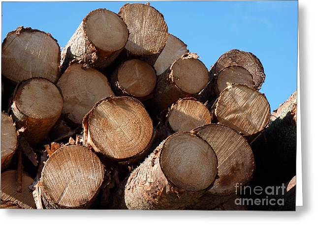 Logs In Sunlight  Greeting Card by Kerstin Ivarsson