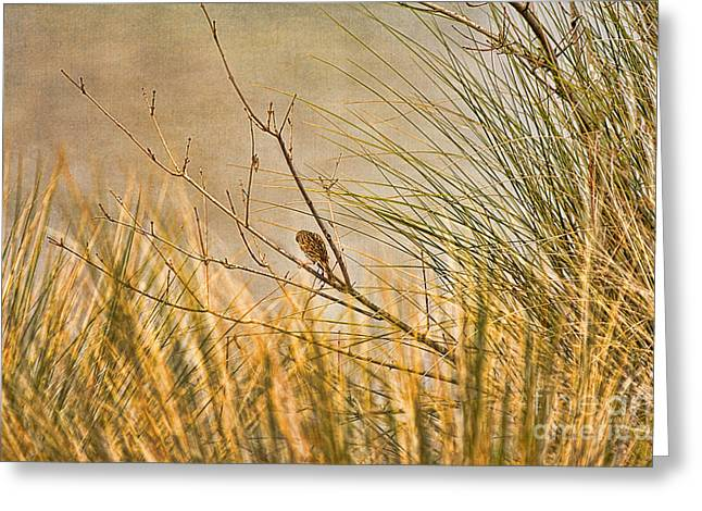 Lone Bird Greeting Card by Anne Rodkin