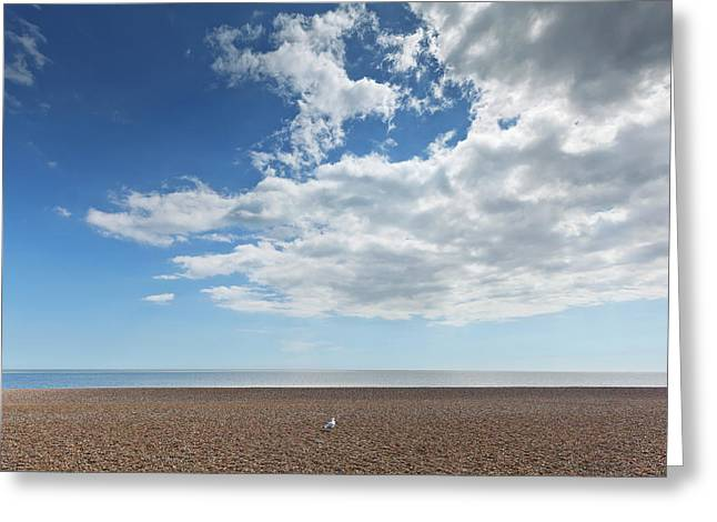 Lone Bird On An Empty Beach With Blue Greeting Card by Terence Waeland