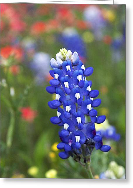 Lone Bluebonnet Greeting Card