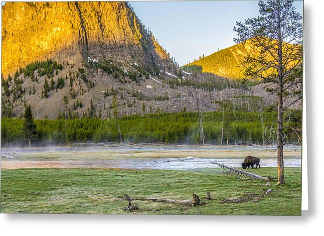 Lone Buffalo Yellowstone National Park Greeting Card