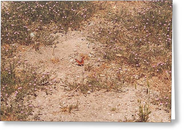 Lone Butterfly Greeting Card