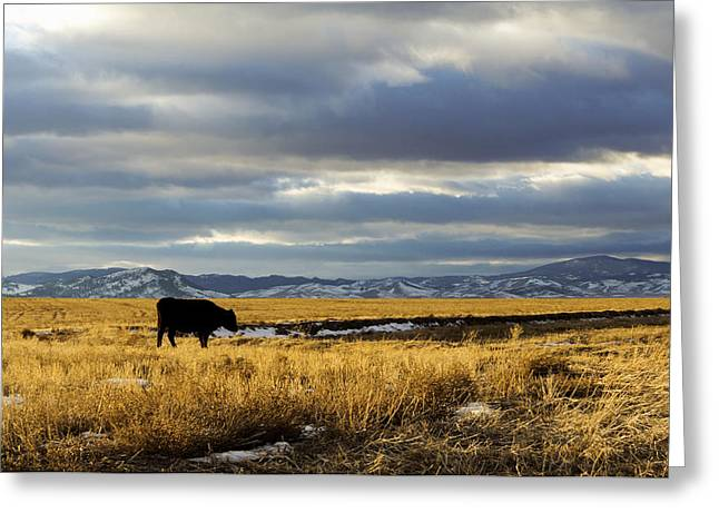 Lone Cow Against A Stormy Montana Sky. Greeting Card by Dana Moyer