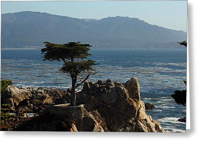 Lone Cypress - Big Sur Iv Greeting Card
