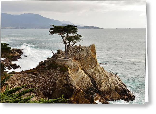 Lone Cypress Detail Greeting Card by Barbara Snyder