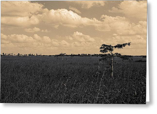 Greeting Card featuring the photograph Lone Cypress II by Gary Dean Mercer Clark