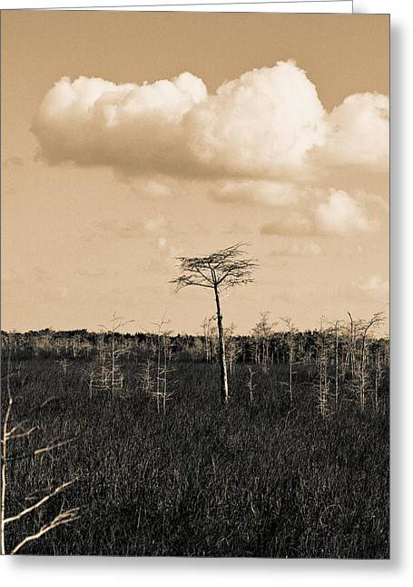 Greeting Card featuring the photograph lone cypress III by Gary Dean Mercer Clark